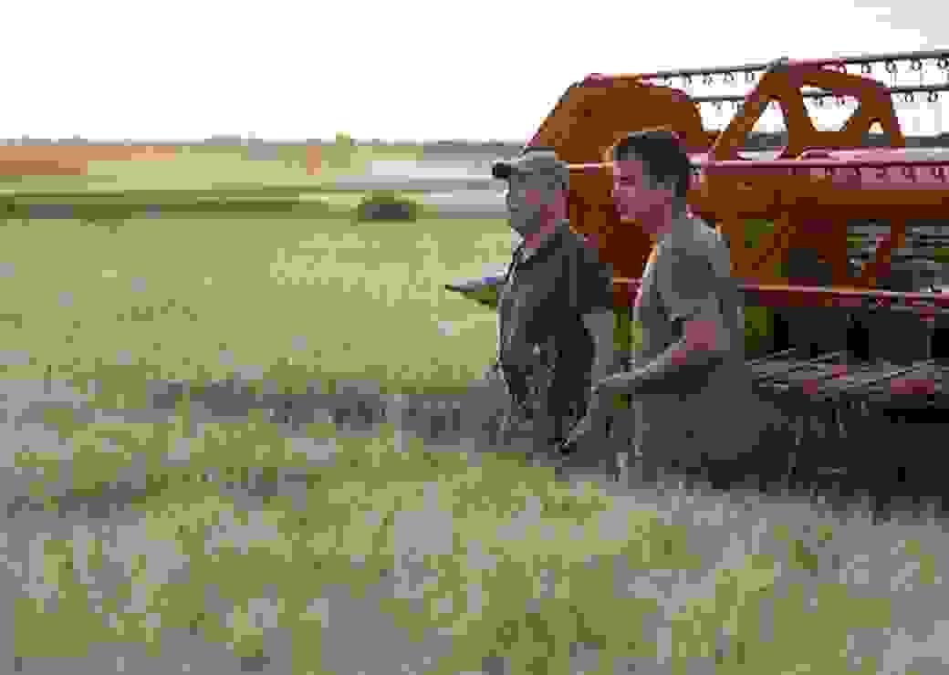 blé, terres agricoles, agriculteur