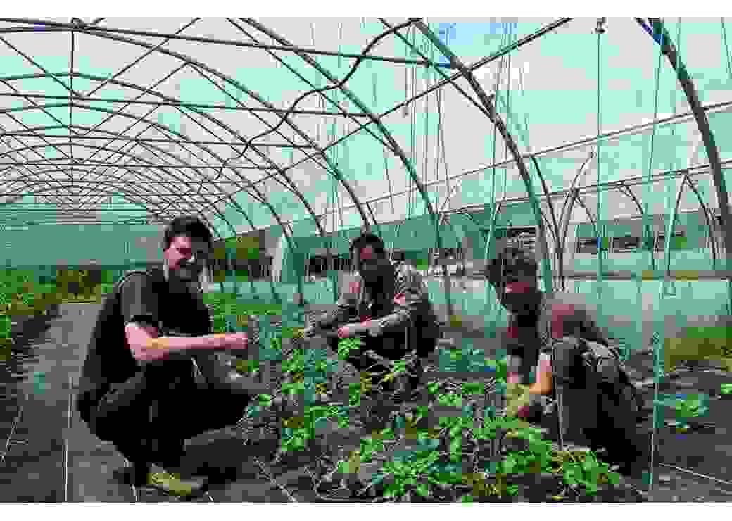 Production maraichère dans la ferme intercommunale du Chalandon