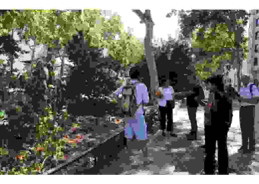 Installations de monitoring des arbres pour le rafraîchissement de la ville, avenue Garibaldi, Lyon.