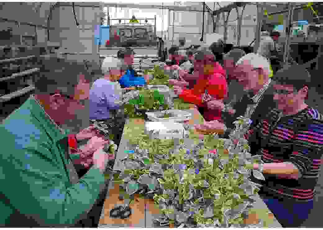 Installé autour d'une table, un groupe de personnes pratique des boutures sur des plantes