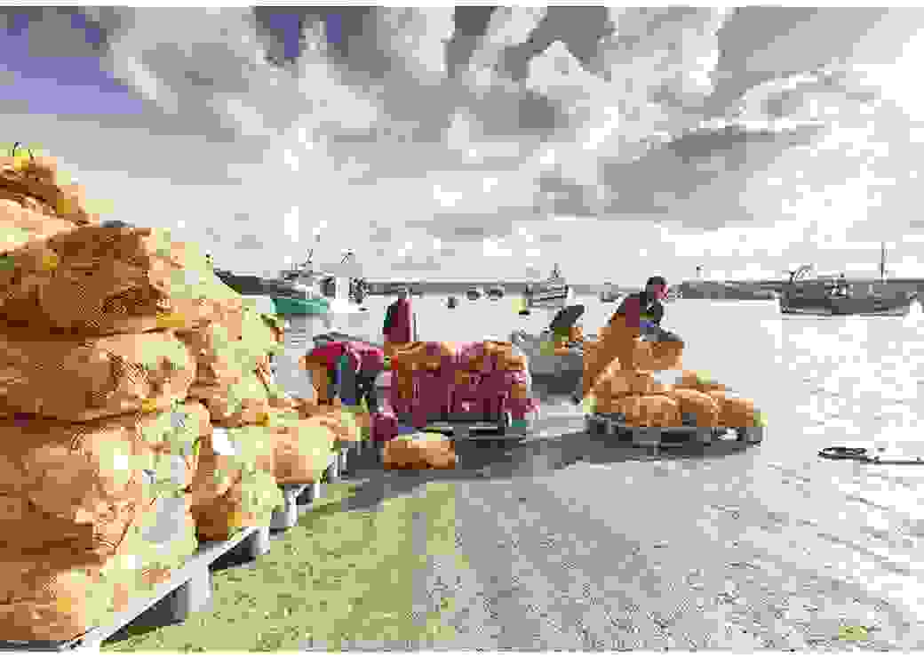 Vus depuis le port, des hommes déchargent des canots et entassent des sacs en filets qui contiennent des coquilles Saint-Jacques