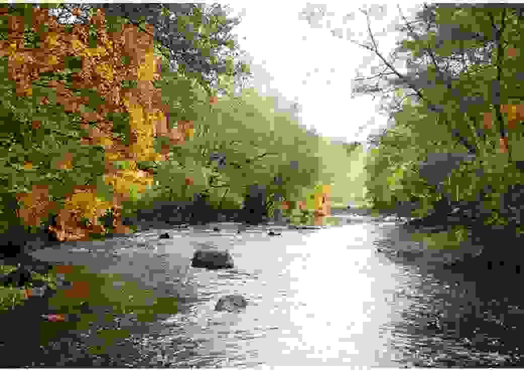 Depuis le milieu de la rivière, vue sur l'eau et les arbres qui se penchent au-dessus