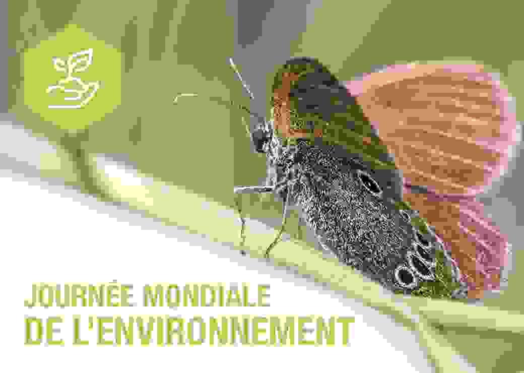 Image Journée de l'environnement
