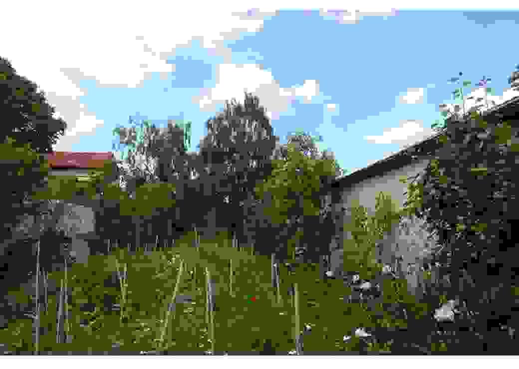 La photo montre un carré de verdure avec des herbes folles, des iris et sur la droite, un mur contre lequel pousse un pecher