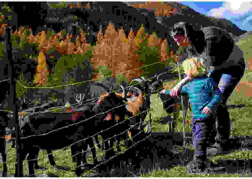 Une femme tient la main d'un enfant blond qui tend de l'herbe à des chèvres, dans un paysage vallonné et très arboré