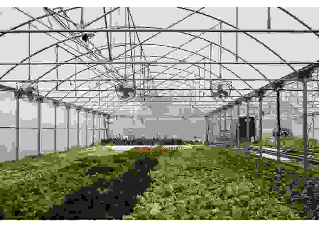 """Photo de la ferme """"Pauline Air Farm"""""""