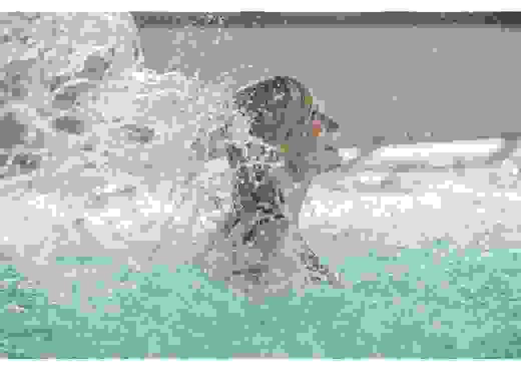 Thermes de Santenay jet d'eau
