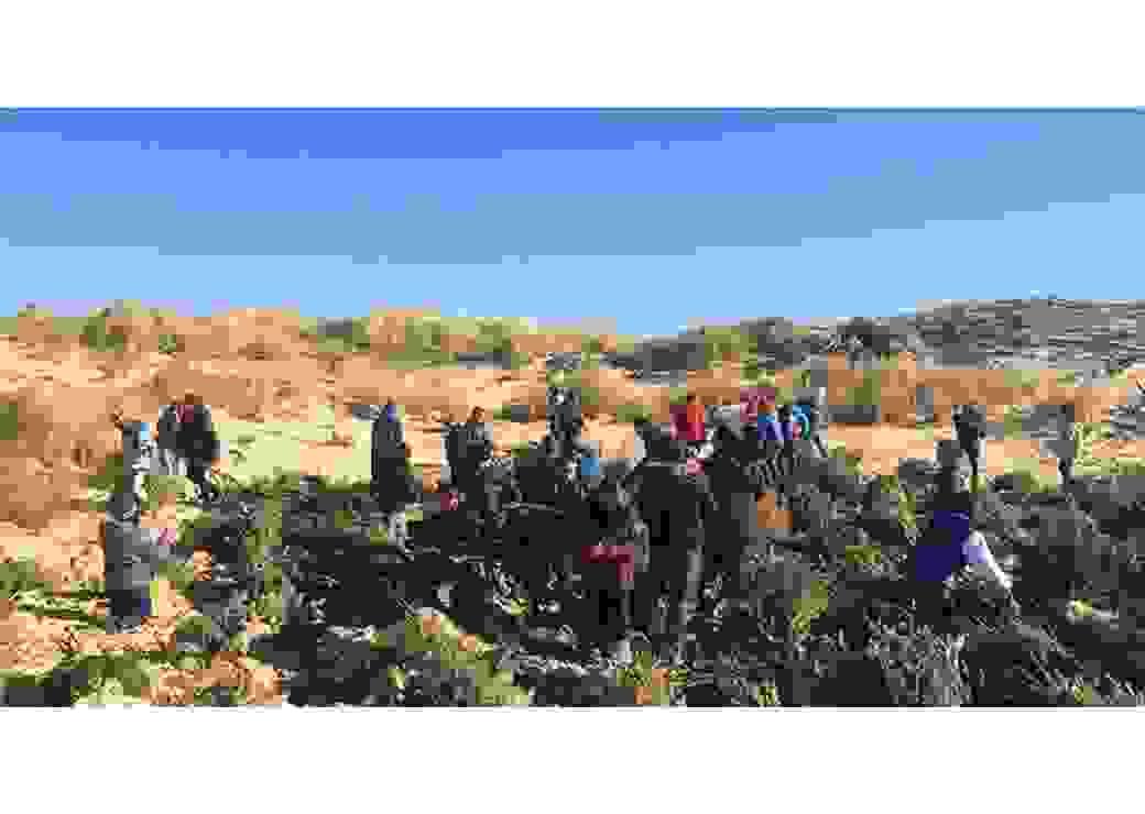 Les branches de sapins favorisent la fixation d'autres végétaux pour retenir le sable des dunes