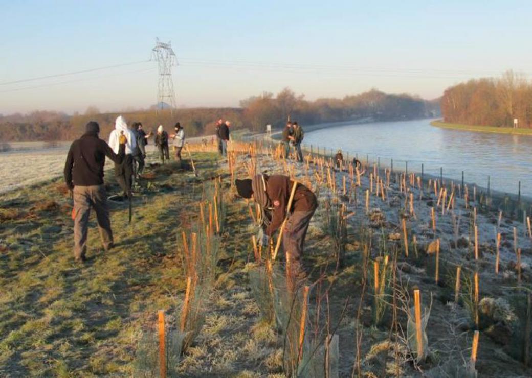 A Auby 12 000 arbres pour séquestrer les pollutions de MetalEurop