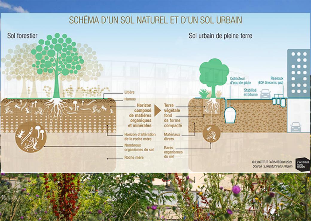 """Documents d'urbanisme : une étude souligne la nécessité d'une définition partagée de la """"pleine terre"""""""